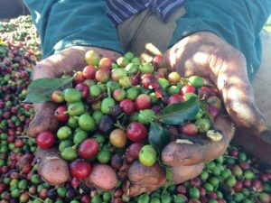 Fairtrade International Corporate Engagement